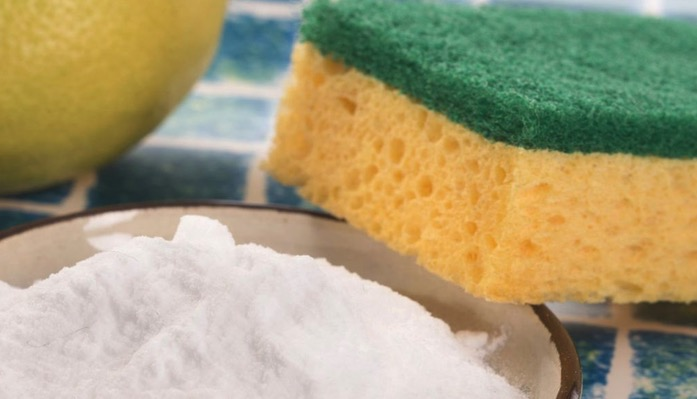 Bacteria Infested Sponges