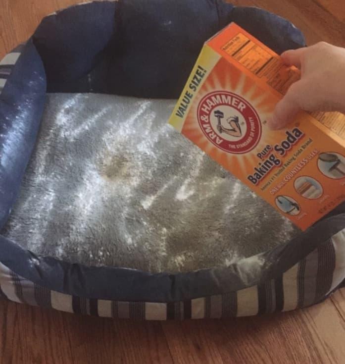 Stubborn Pet Bed Smells