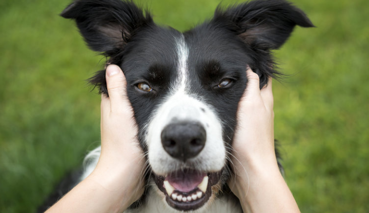 Owning A Dog Will Extend And Improve Your Life
