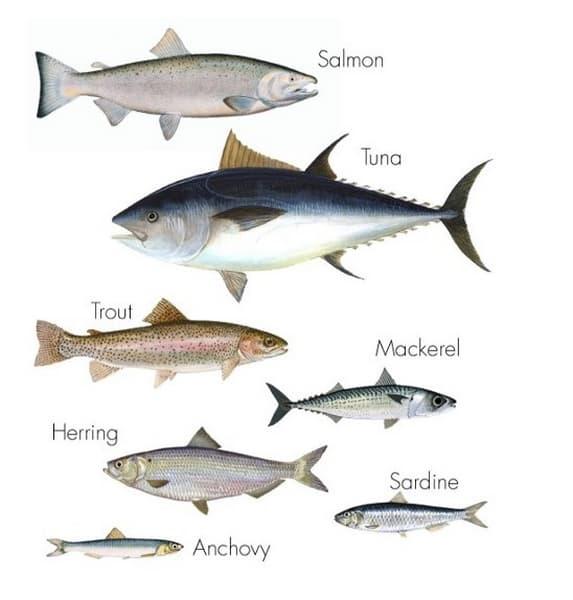Fetter Fisch