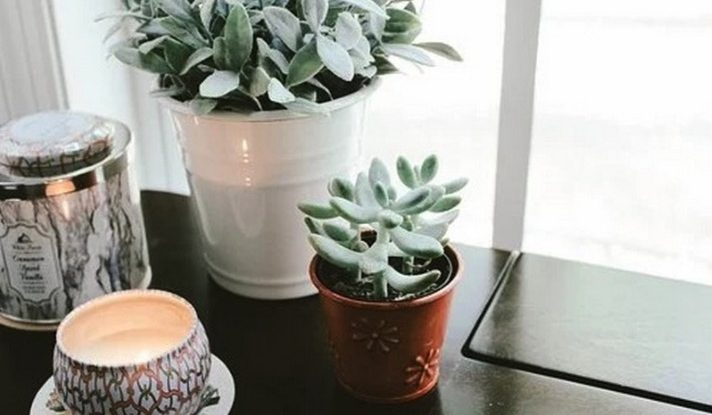Easy To Grow Plants To Brighten Up Your Office